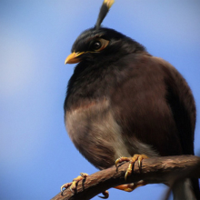 Angry Bird Bomber